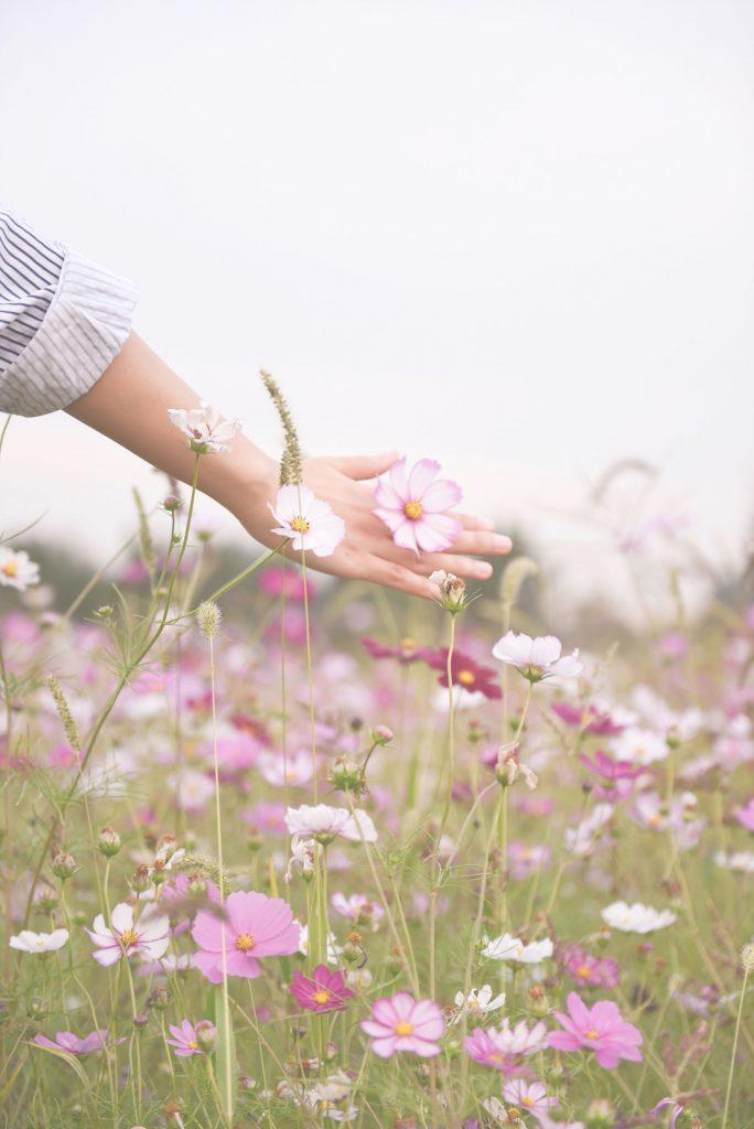 espiral terapias aromaterapia